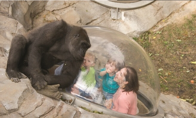 美国最值得游玩的10大动物园